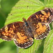 Butterfly 2 Art Print