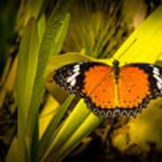 Butterfly 23 Art Print