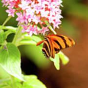 Butterfly-4 Art Print