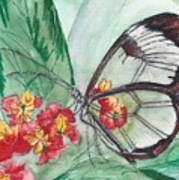 Butterfly 4 Art Print