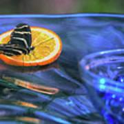 Butterfly 6316 Art Print