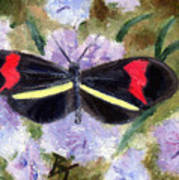 Butterfly Aceo Art Print