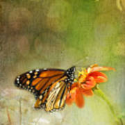 Butterfly And Bokeh Art Print