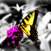 Butterfly And Lilac Art Print