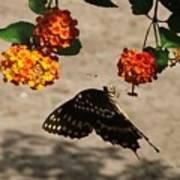 Butterfly And Nature Art Print