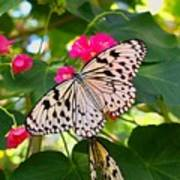 Butterfly And Pink Flower Art Print