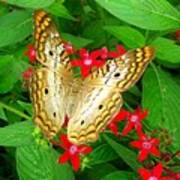 Butterfly And Red Star Sprig Art Print