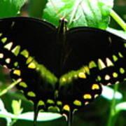 Butterfly Art 3 Art Print