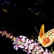 Butterfly Banquet 1 Art Print