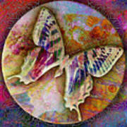 Butterfly Art Print