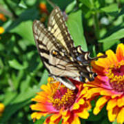 Butterfly Beauty Art Print