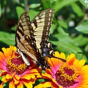 Butterfly Beauty II Art Print