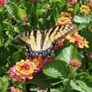 Butterfly Blend Art Print