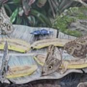 Butterfly Brunch Art Print