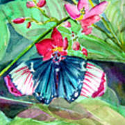 Butterfly Buffet Art Print