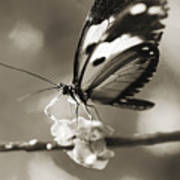 Butterfly Close-up Art Print