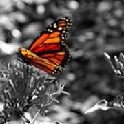 Butterfly Color On Black And White Art Print