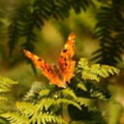 Butterfly Comma Art Print