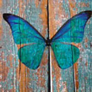 Butterfly Exhibition 1 Art Print