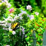 Butterfly In A Garden Art Print