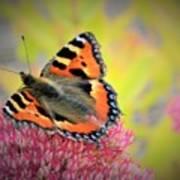 Butterfly In Bloom Art Print