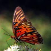 Butterfly In Orton Art Print