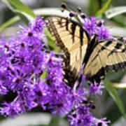 Butterfly In Summer Art Print