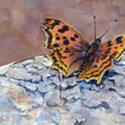 Butterfly-in-the-old-growth-forest Art Print