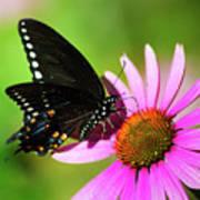 Butterfly In The Sun Art Print