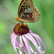 Butterfly In The Wind Art Print