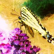 Butterfly Journey Art Print