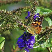 Butterfly Joy Art Print