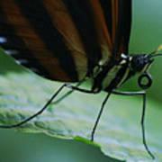 Butterfly Leaf Art Print