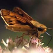 Butterfly-lick Art Print