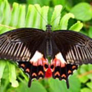 Butterfly Maze Art Print
