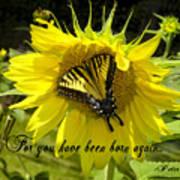 Butterfly Monarch Ba Art Print