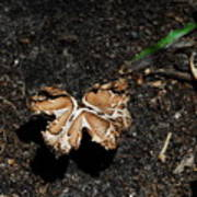 Butterfly Mushroom Art Print