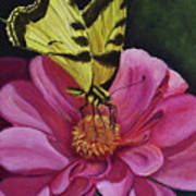 Butterfly On A Pink Daisy Art Print