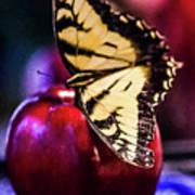 Butterfly On Apple Art Print