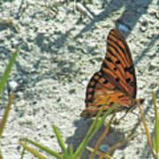 Butterfly On Beach Art Print
