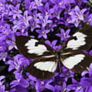 Butterfly On Campanula Get Mee Art Print