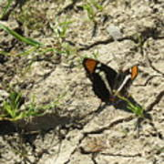Butterfly On Cracked Ground Art Print
