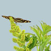 Butterfly On Flower Cluster Art Print
