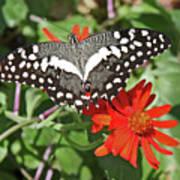 Butterfly On Flower Art Print
