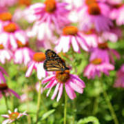 Butterfly On Flowers Art Print