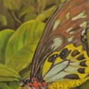 Butterfly On Leaves Art Print