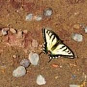 Butterfly On The Beach Art Print