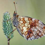 Butterfly On The Grass Art Print