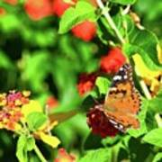 Butterfly On The Red Flower 2 Art Print