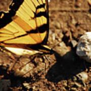 Butterfly On The Rocks Art Print